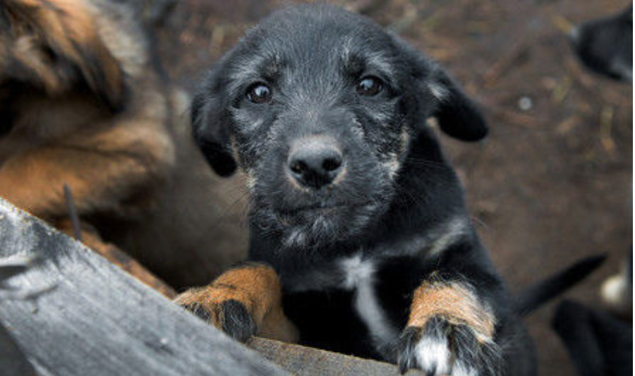 Putin Signs Animal Cruelty Ban in Russia, Activists Claim