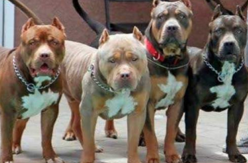 Changing The Genetics Of Pit Bulls