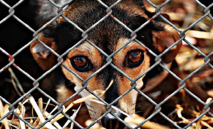 Dog Mauls LA Animal Services' Shelter Volunteer – Accident