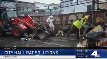 LA City Hall tries to resolve rat problem with cats.